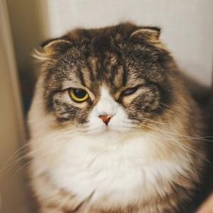 不機嫌そうな猫 (c)ぱくたそ